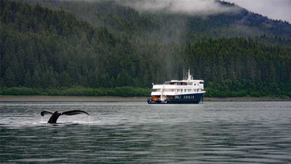 Small ship Safari Explorer seen on a British Columbia Canada forested coastline with a whale tail in the water foreground.