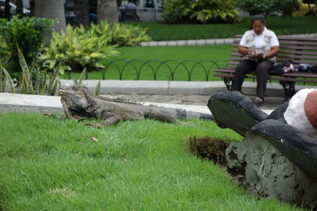 Iguanas and statues near bench in Bolivar Park in Guayaquil, Ecuador.