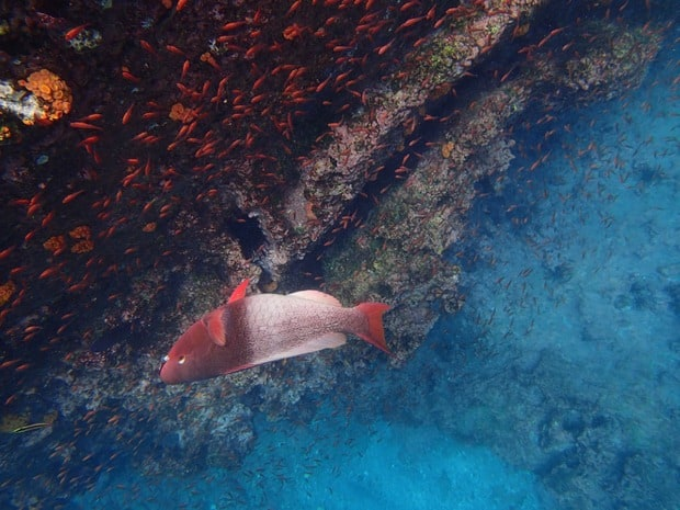 Fish seen underwater on a snorkeling tour from a small ship cruise in the Galapagos.