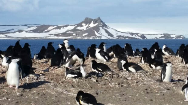 Penguins seen on tour from a small cruise ship in Antarctica.