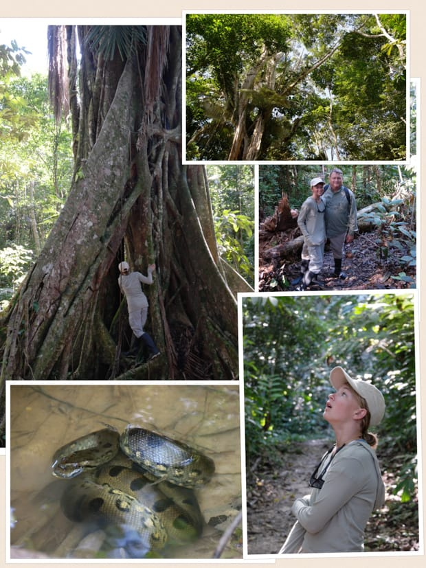 Collage of photos taken on a jungle tour from their small ship Amazon cruise including tree roots, a snake, canopy views, and people looking for wildlife.