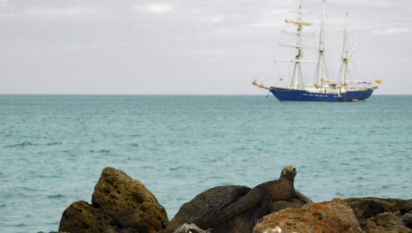 An iguana basks on rocks in front of a Galapagos masted sailing ship