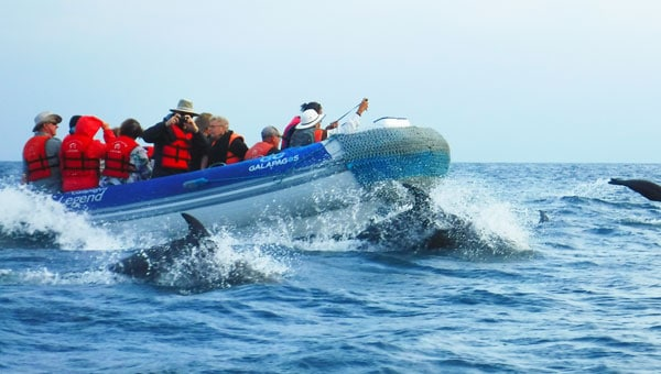 Travelers in a skiff cruise alongside dolphins in the Galapagos Islandss